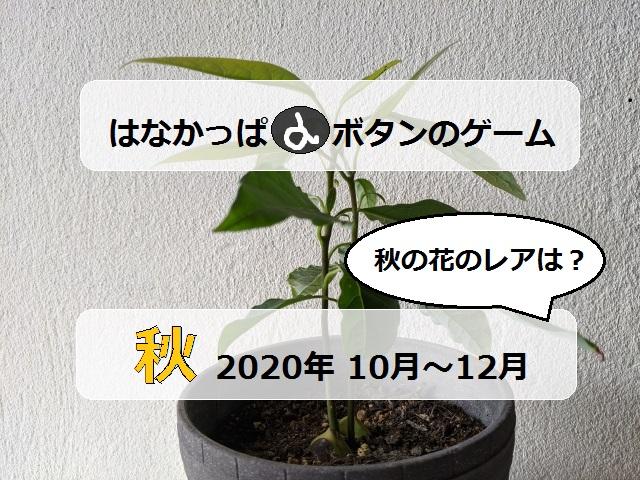 はなかっぱ2020年秋アイキャッチ